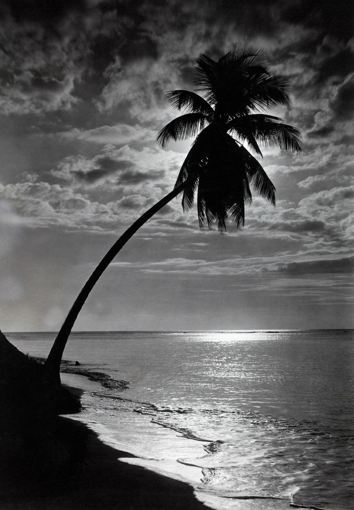 Die Silhouette einer Palme (Cocos nucifera) verdeckt die Sonne an einem Strand.