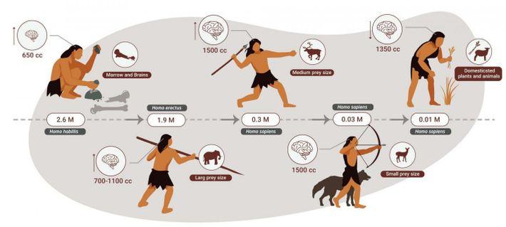 Erst als größere Tiere am Ende der Steinzeit knapp wurden, hat der Mensch den Anteil pflanzlicher ...