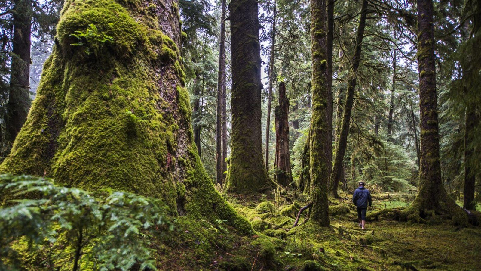 Studien zeigen, dass bereits zwei Stunden Waldbaden pro Woche das Immunsystem um bis zu 40 Prozent ...