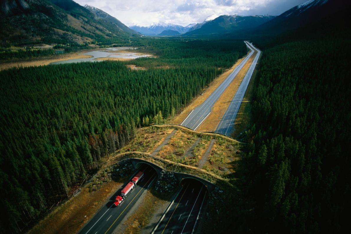 Wildbrücke im kanadischen Alberta