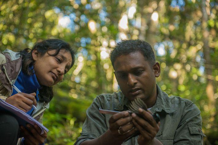 Biologen untersuchen Vogel