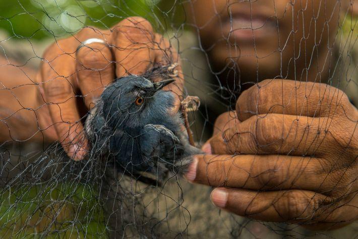 Biologe holt Vogel aus Netz