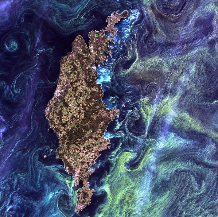 """""""Van Gogh"""" Algae"""