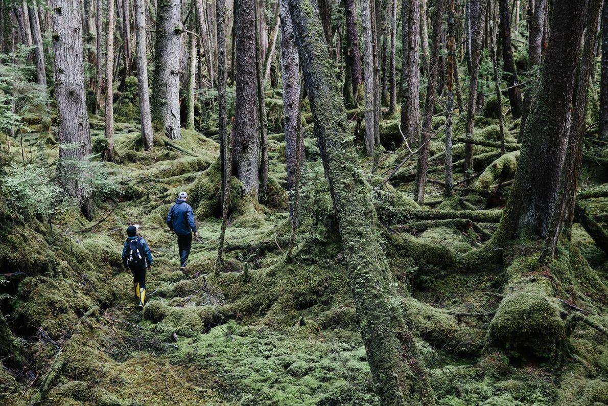 8. UMGEBEN VON BÄUMEN  British Columbias gemäßigter Regenwald ist eines der seltensten Ökosysteme der Welt. Tiefgrüne Fichten, ...