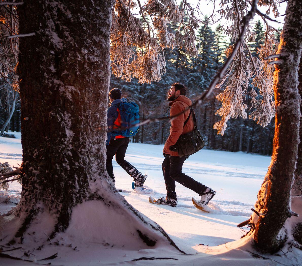 Schneeschuh-Guide Nejc Heberle geht bei perfekten Schneebedingungen und atemberaubenden Lichtverhältnissen voran durch einen von Sloweniens winterlichen ...