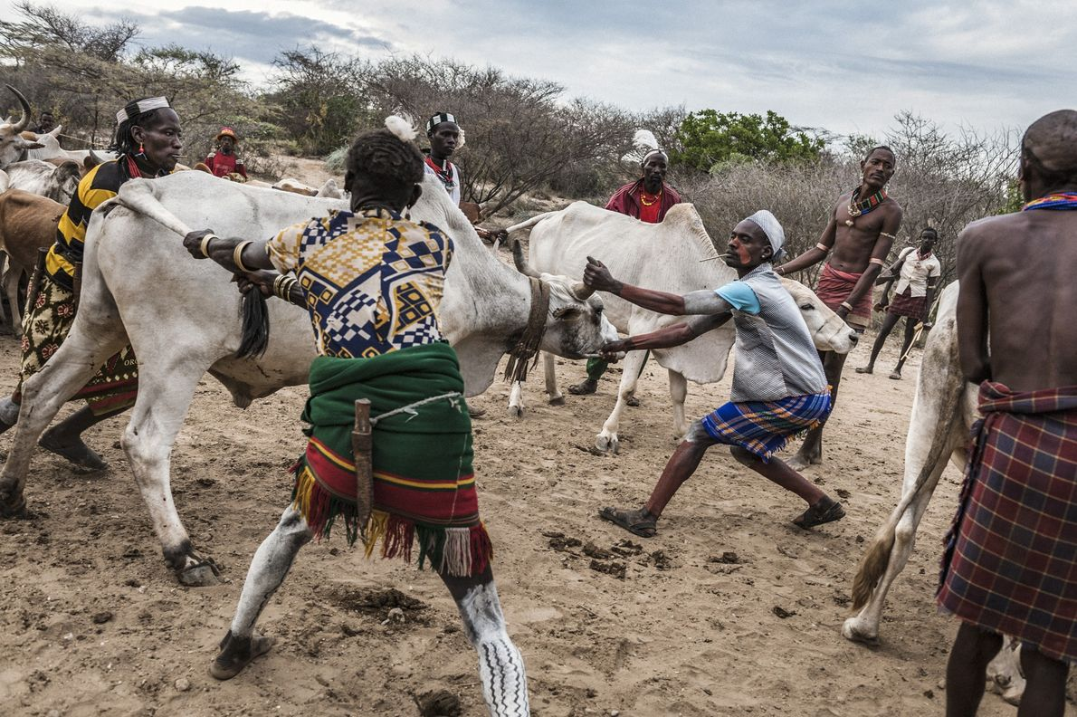 Hamar-Männer treiben Vieh
