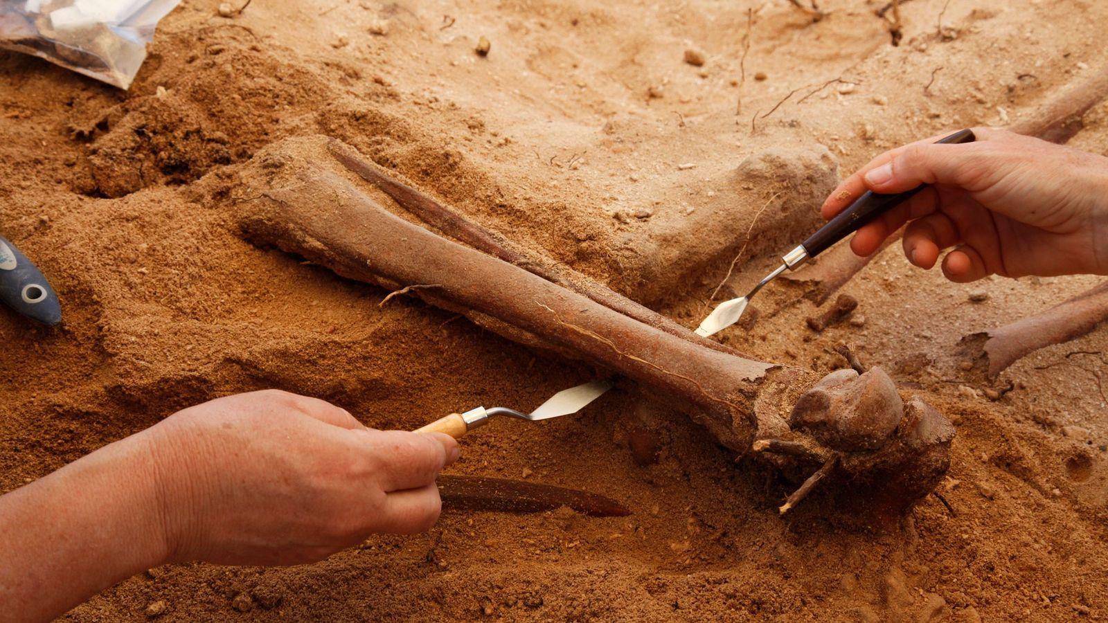 Archäologen hoffen, dass weitere Untersuchungen des circa 400 Jahre alten Schiffswracks der Batavia und der Meuterei ...