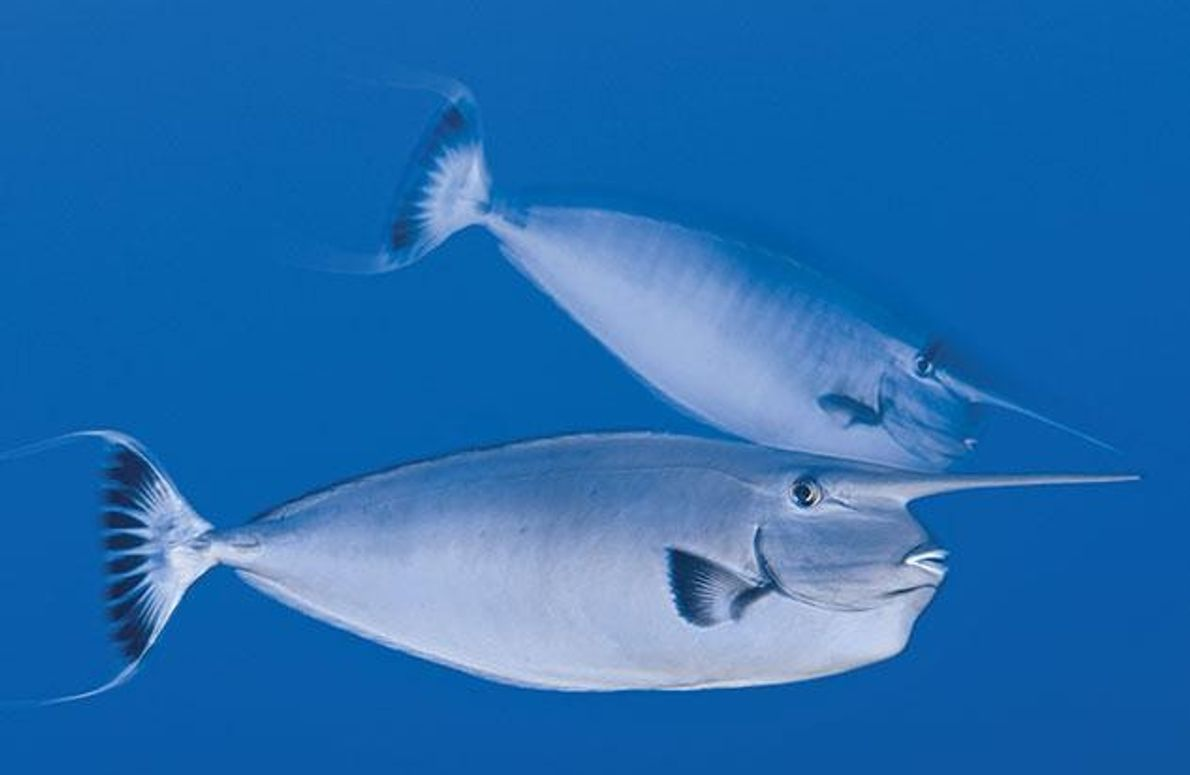 325 Fischarten