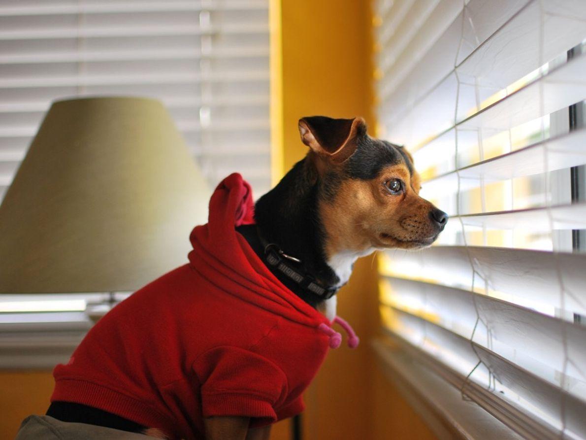 """""""So wartet mein Hund auf meine Frau"""", erzählt Your Shot-Fotograf DJ Sonza."""