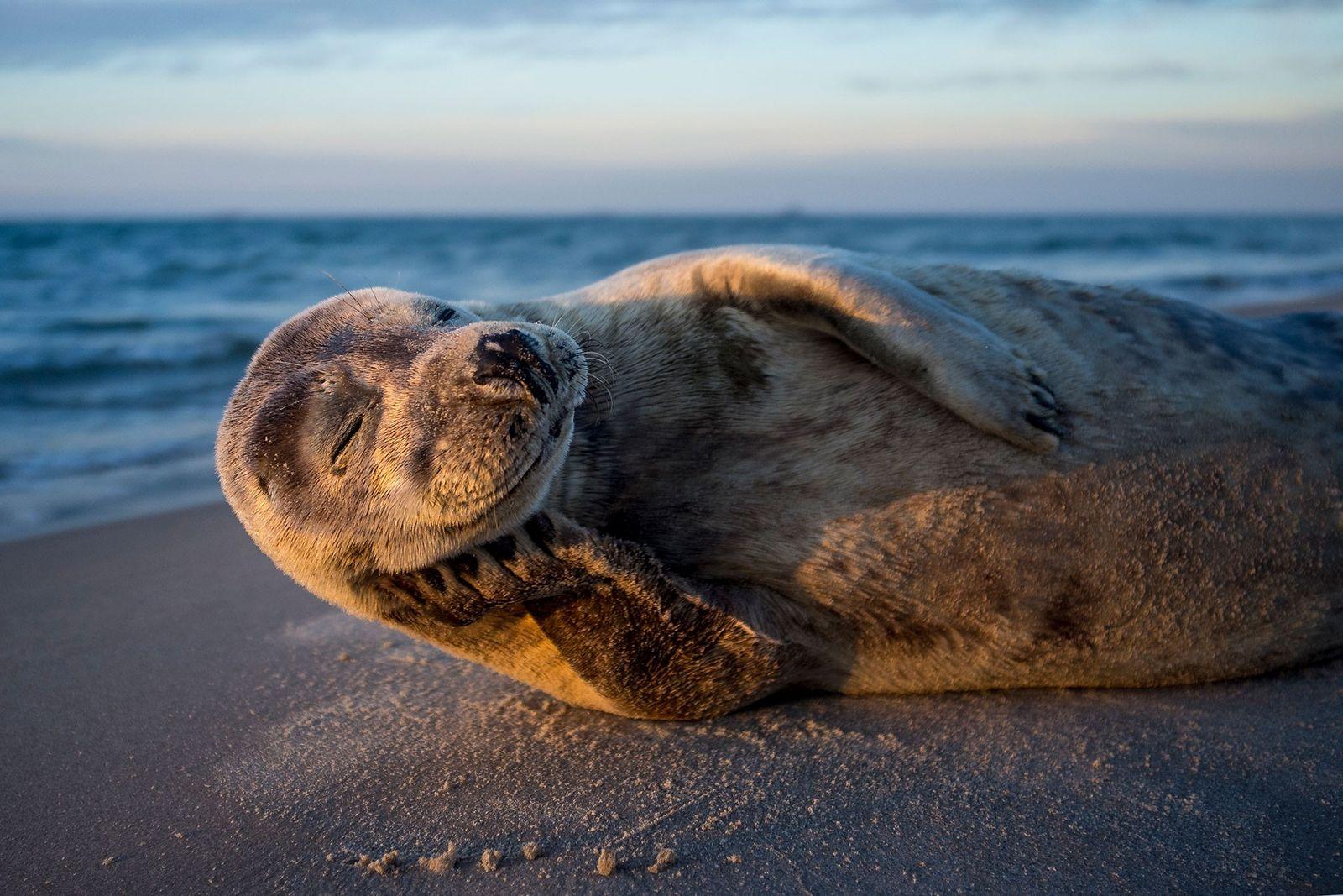 Auf diesem Planeten wird es nie langweilig: Faszination Tierwelt