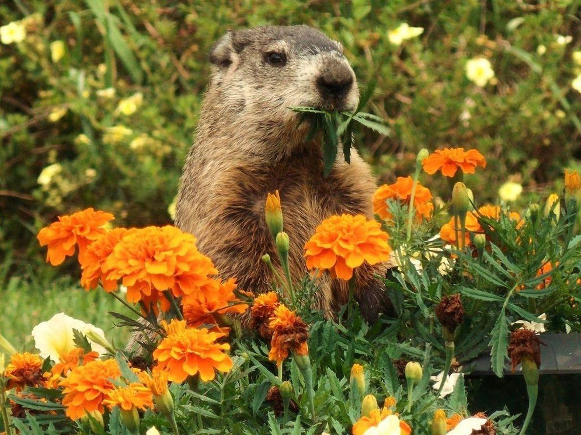 Heidi gönnt sich ein paar Studentenblumen.