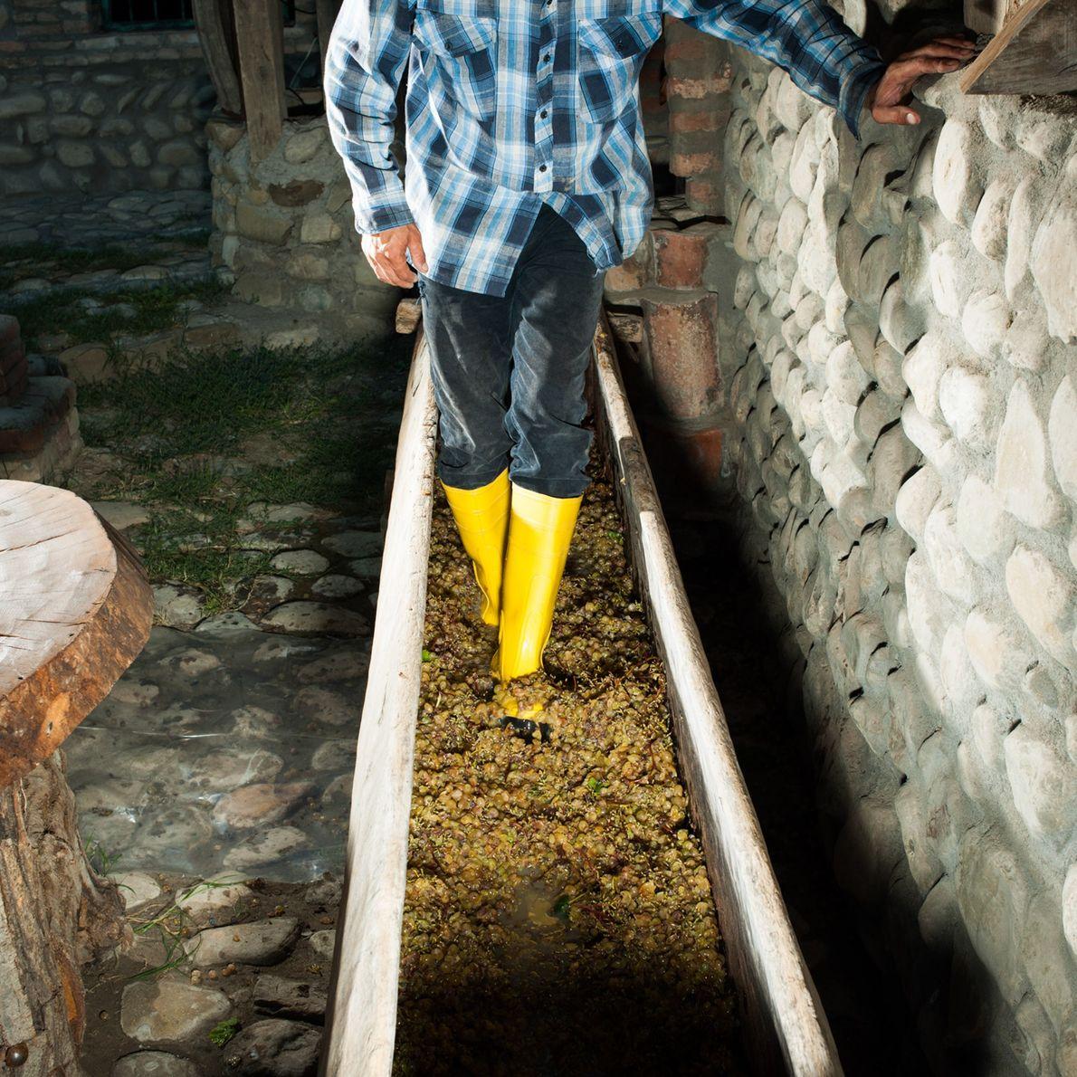 """Ein georgischer Weinmacher stampft Trauben mit den Füßen in einer traditionellen Weinpresse oder """"Satsnakheli""""."""