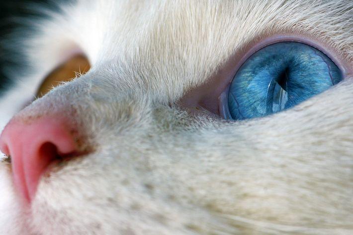 Fotografiert ein charakteristisches Merkmal eures Haustieres.