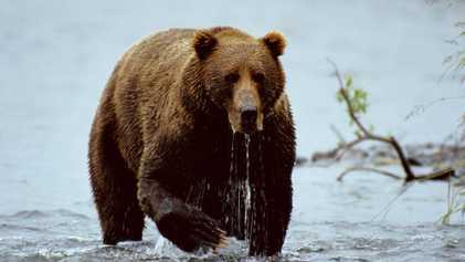 Bärenbrüder: Braunbär und Eisbär