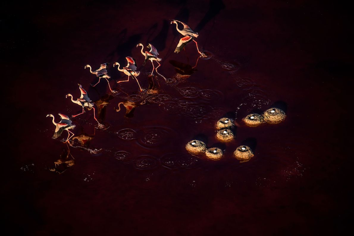 Flamingos. Tansania.