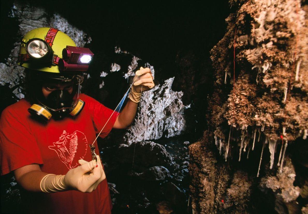 Ein Höhlenforscher untersucht sogenannte Snottiten – einzellige Organismen, die eine schleimige und säurehaltige Substanz produzieren. In ...