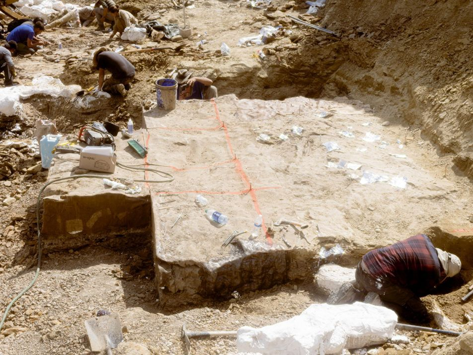 Wie verschifft man ein Stück Dinosaurier-Friedhof?