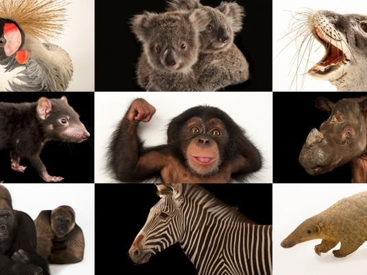 Diese 50 Tierarten sind in Gefahr – und so können wir ihnen helfen