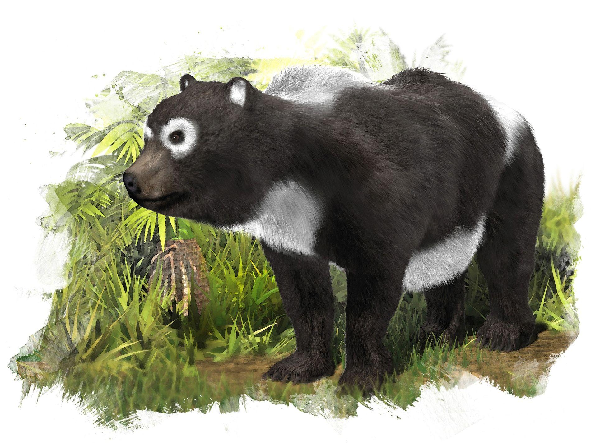So könnte Kretzoiarctos beatrix ausgesehen haben, der vor elf Millionen Jahren im heutigen Spanien lebte.