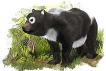 panda relative new extinct species