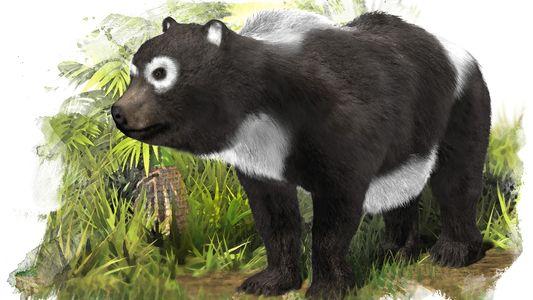 "Das Rätsel des europäischen ""Pandas"""