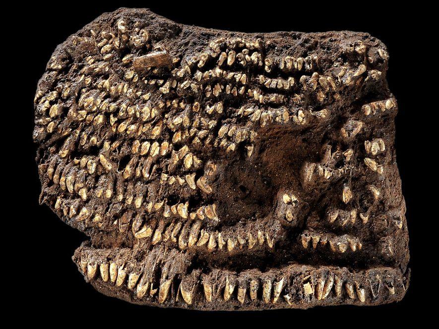 Steinzeit-Mode: Handtasche war mit 100 Hundezähnen verziert