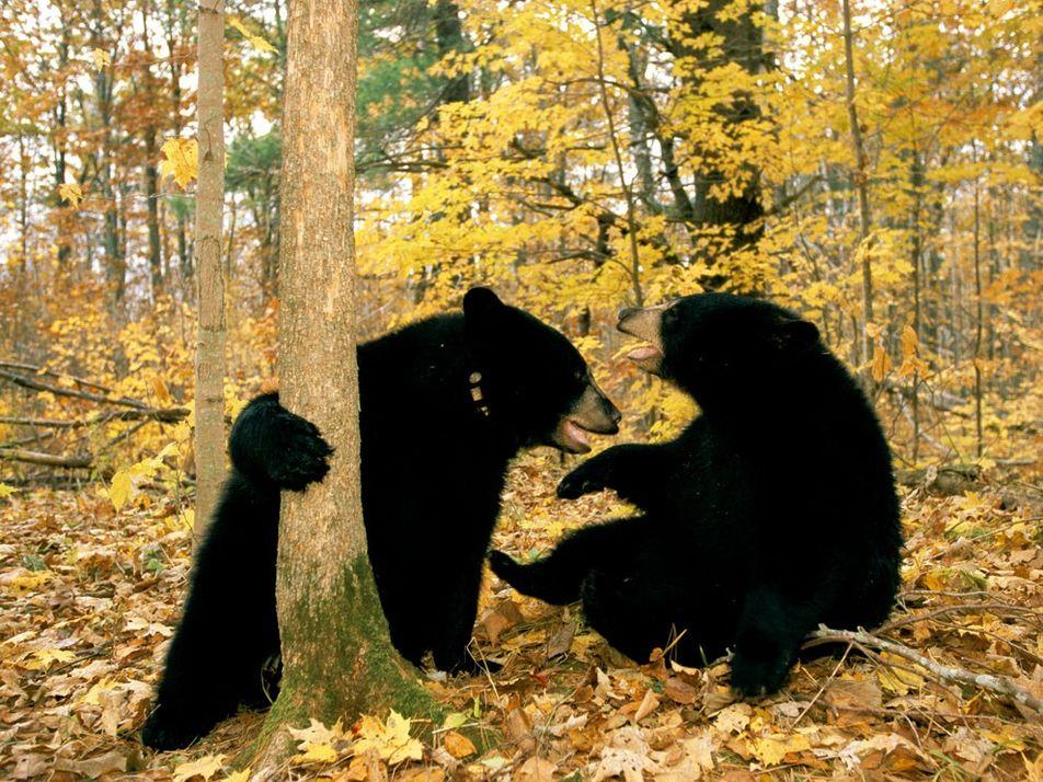 Galerie: Bärenbrüder