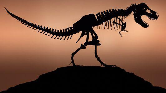 """Hatte der echte T. rex Ähnlichkeit mit dem aus """"Jurassic Park""""?"""