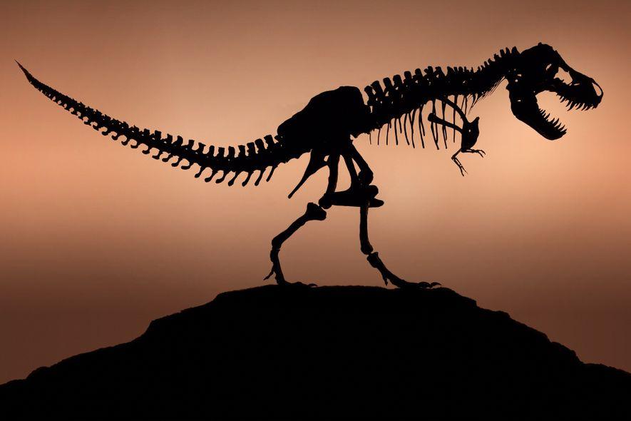 """Laut Experten ist das Exemplar in """"Jurassic Park"""" bis heute immer noch die beste filmische Darstellung ..."""
