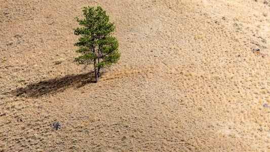 Bäume rufen um Hilfe – Wissenschaftler verstehen ihre Signale
