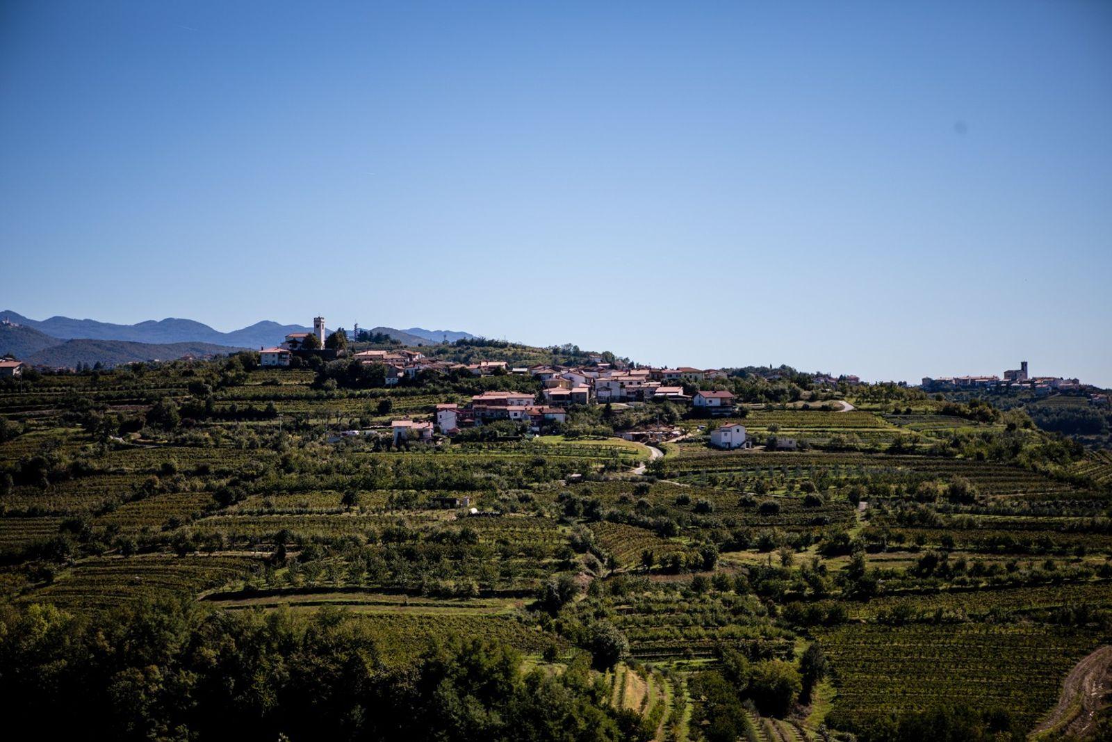 Die Hügellandschaft rund um das Dorf Višnjevik erinnert an italienische Weinberge.