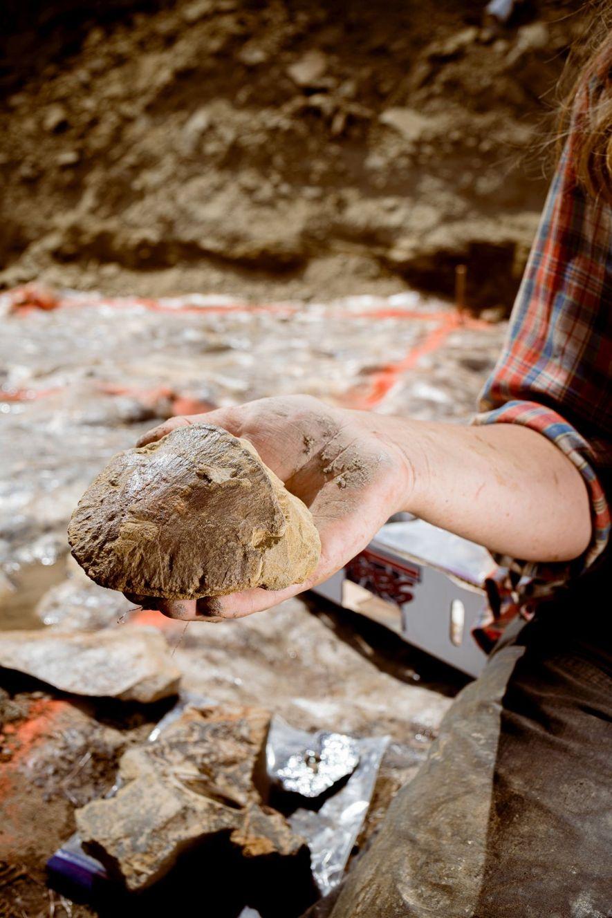 Die Fingerendglieder von Edmontosaurus sehen den Hufen heutiger Huftiere sehr ähnlich. Damit waren sie gut angepasst, ...