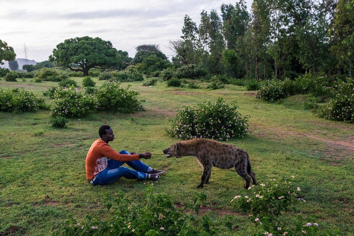 Hyäne mit sitzendem Mann