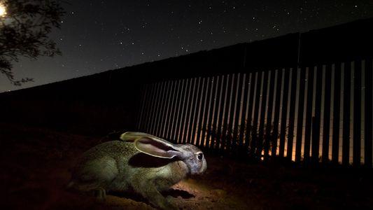 USA hebeln Naturschutzgesetze für den Bau der Grenzmauer aus