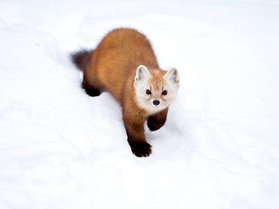 Galerie: Kanadas fotogene Tierwelt