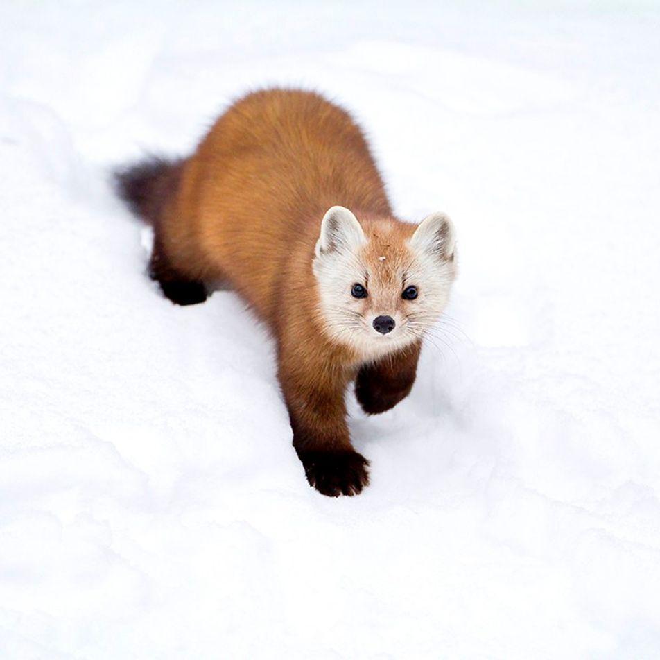 Kanadas fotogene Tierwelt