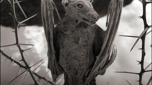 """Galerie: Ungewöhnliche Aufnahmen: Vögel und Fledermäuse """"verkalken"""" in afrikanischem See"""