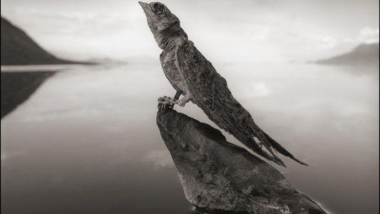 """Ungewöhnliche Aufnahmen: Vögel und Fledermäuse """"verkalken"""" in afrikanischem See"""
