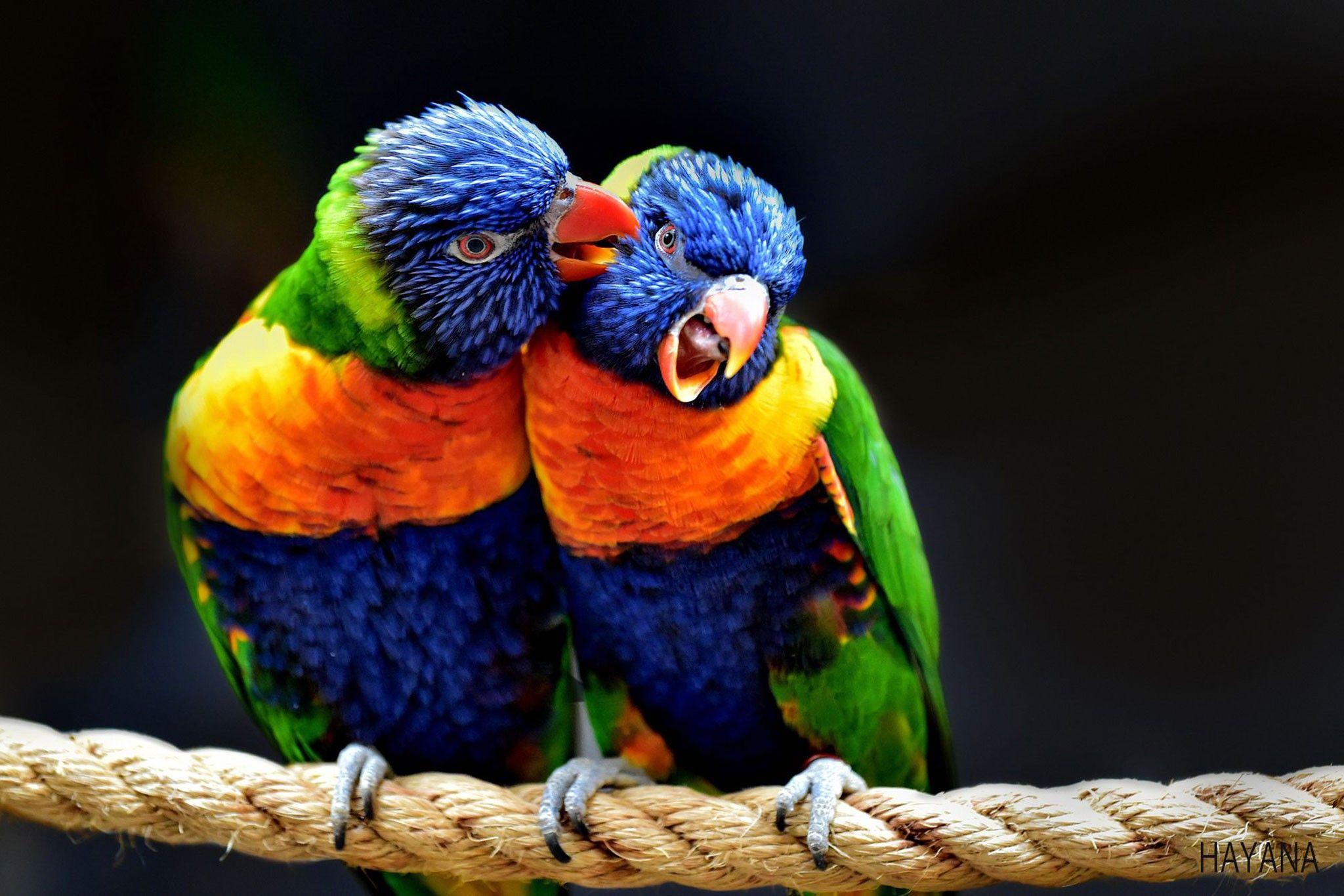 Galerie: Um die Welt in 31 fantastischen Vogelporträts