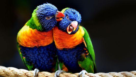 Um die Welt in 31 fantastischen Vogelporträts
