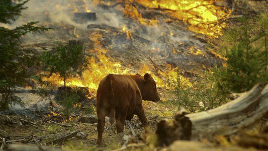 Wie gehen Wildtiere mit Waldbränden um?