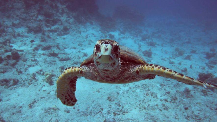 Wissen kompakt: Die Ozeane und das Klima.