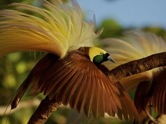 Galerie: Regenbogenpracht: Die Federkleider der Vögel