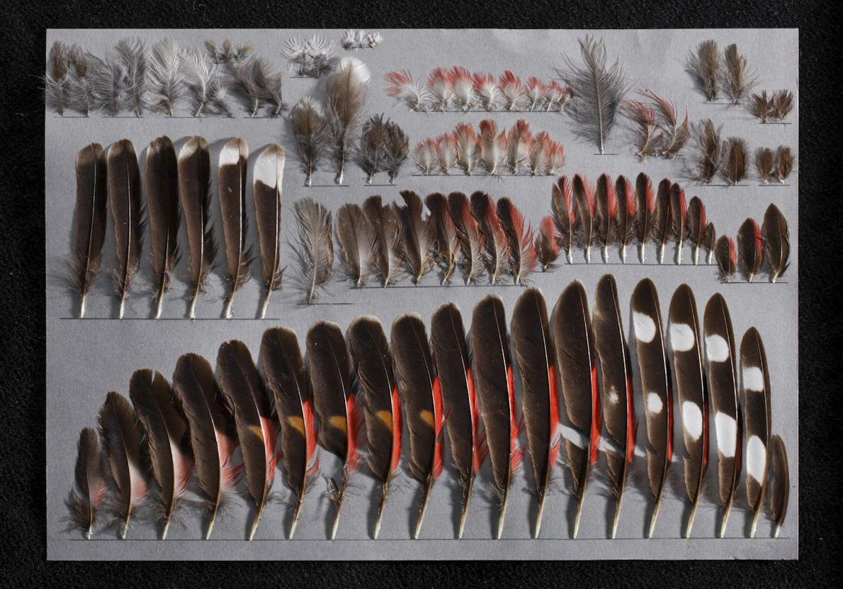 A Feather Portrait