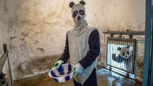Im Pandakostüm zur Arbeit – für die Wissenschaft!