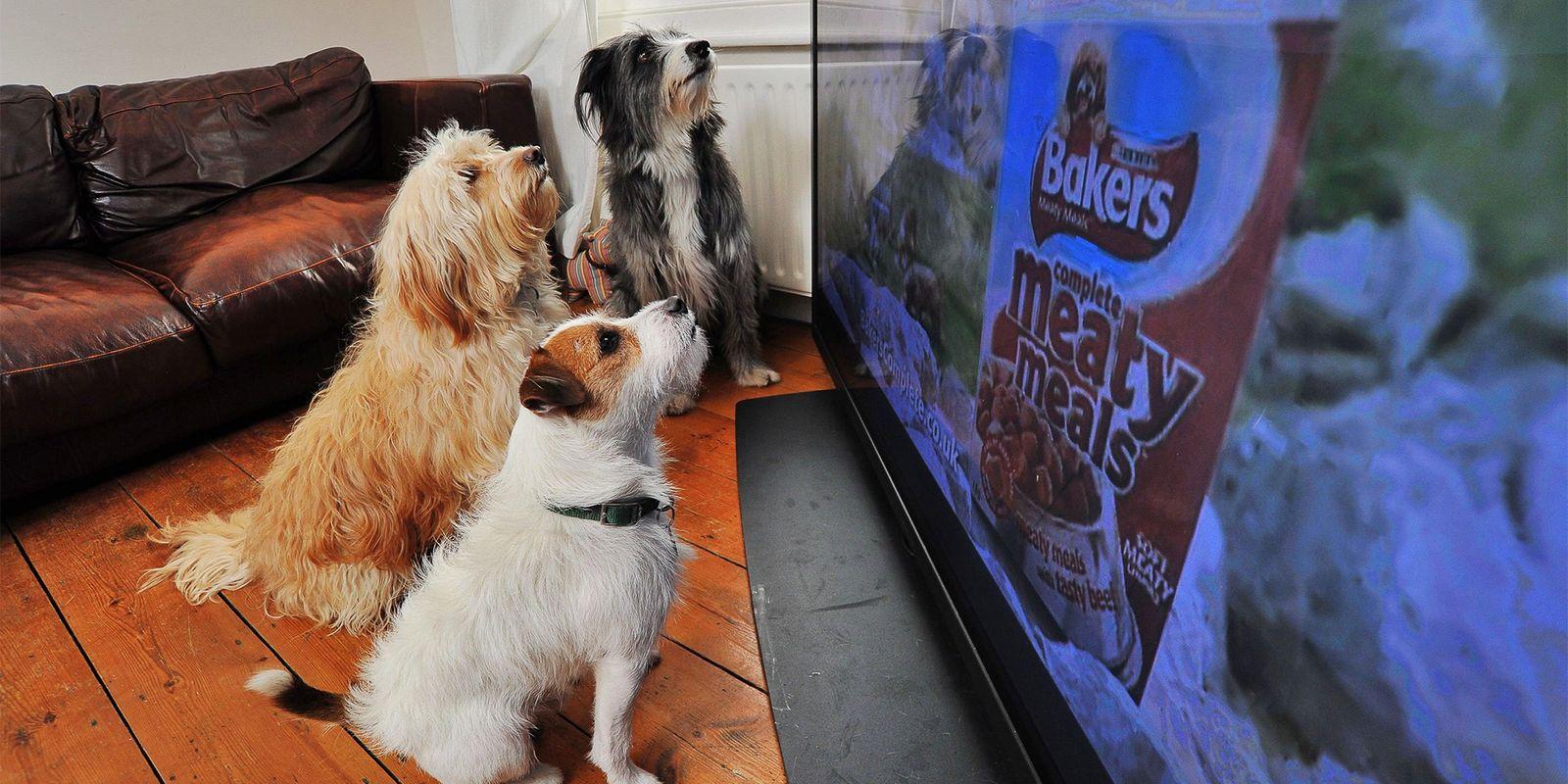 Warum sehen Hunde gerne fern?