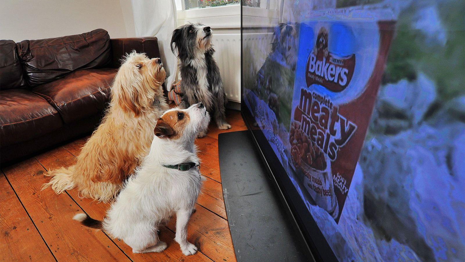 Hunde schauen TV