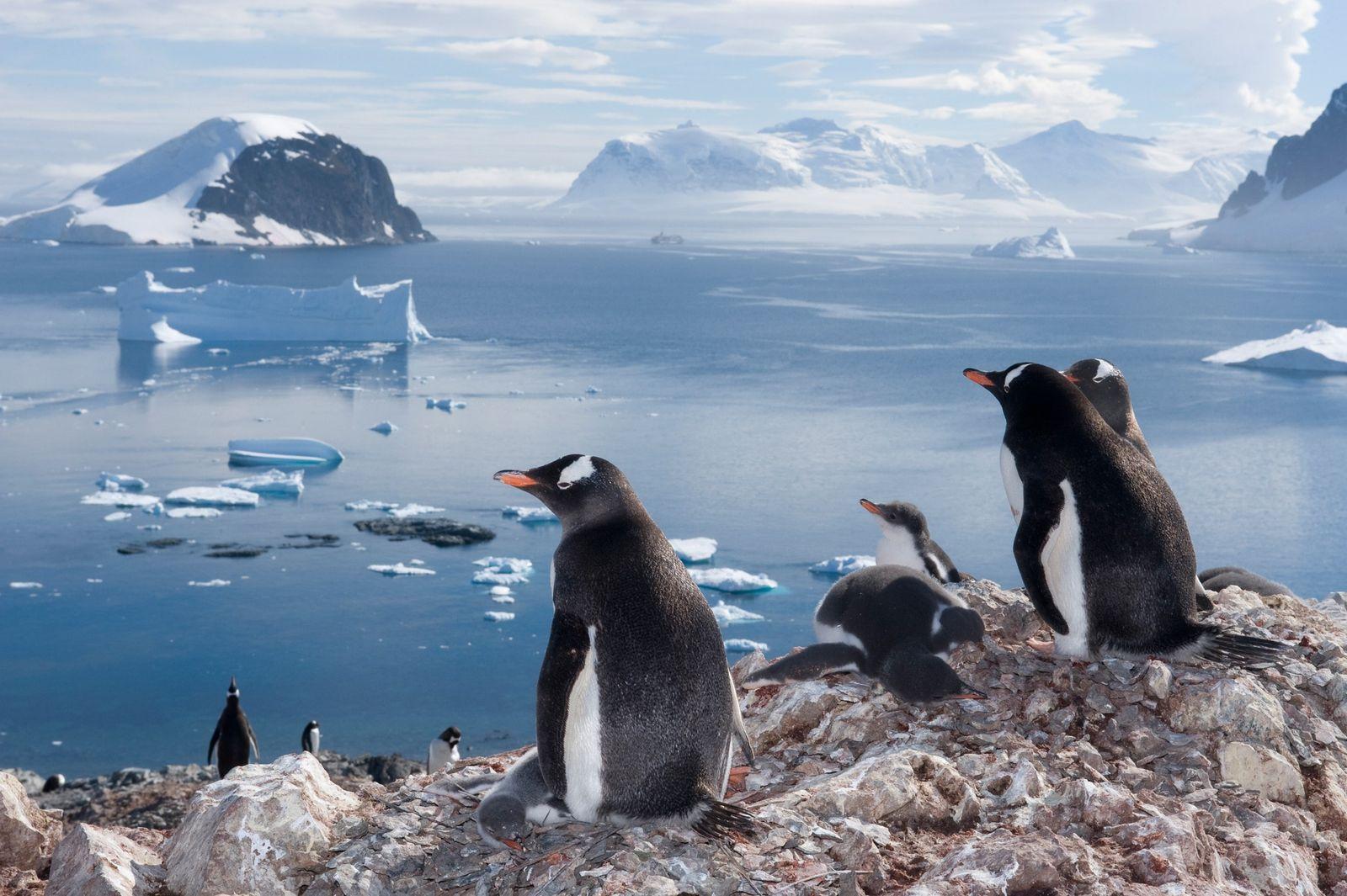 Faszination Pinguine