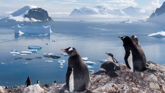 Galerie: Unsere Lieblingsfotos von Pinguinen