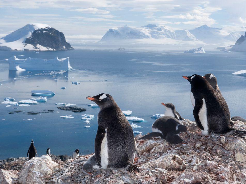 Diese Fotos lassen die Herzen von Pinguin-Fans höherschlagen